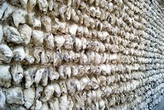 Oyster shell walls Stock Images
