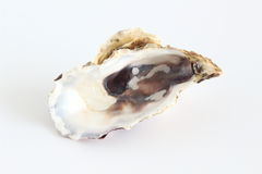Oyster shell Royalty Free Stock Photography