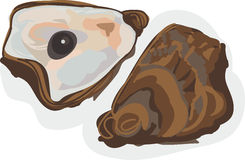 Oyster Shellfish Stock Images