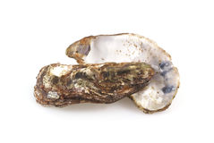 Oyster shells. Royalty Free Stock Images