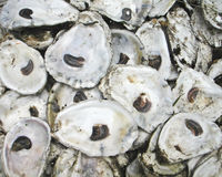 Oyster Shells Royalty Free Stock Photos