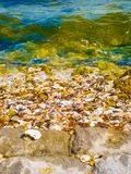Oyster Shells stock photography