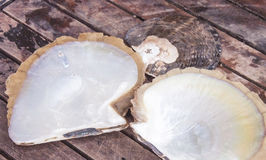 Oyster shells Stock Photo