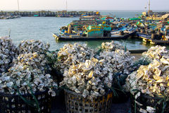 Oyster shells and fishing boats Stock Photos