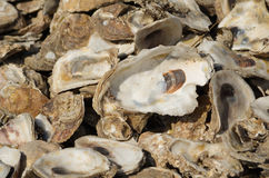 Oyster Shells. In a pile in Palacios, Texas royalty free stock image