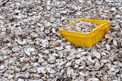 Oyster shells Stock Image