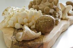 Oyster, shiitake, enoki and shimoji mushrooms Stock Photos