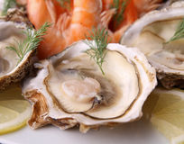 Oyster and shrimp Stock Images