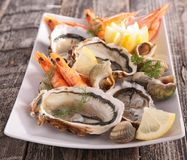Oyster, shrimp and shellfish Royalty Free Stock Photos