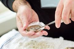 Oyster shucking Stock Photos
