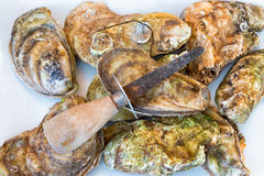 Oyster Shucking Stock Photography
