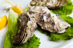 Oyster with spicery Stock Image
