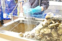 The oyster station at seafood store, worker hand opening oyster royalty free stock photos