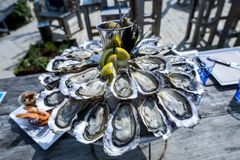 Oyster tray, Cap Ferret. France Stock Photography