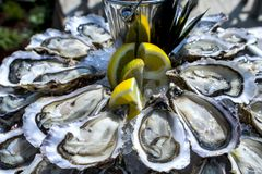 Oyster tray, Cap Ferret. France Stock Image