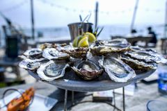 Oyster tray, Cap Ferret. France Stock Images