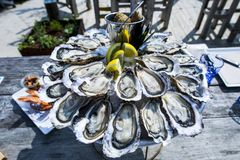 Oyster tray, Cap Ferret. France Royalty Free Stock Photo