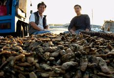 Oyster Wholesalers 01. Oyster wholesalers in Lau Fou Shan, Hong Kong. Lau Fou Shan is a famous oyster production base in Hong Kong. They are facing the problem Royalty Free Stock Photos