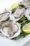 Oyster with rocket salad and lemon slice Royalty Free Stock Photo