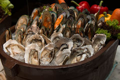Oyster on the wood box in restaurant Stock Photos