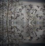 Oystercatchers Стоковое Изображение RF