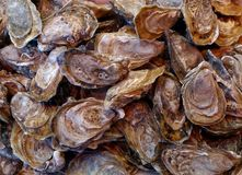 Oysters' close up. At the market Royalty Free Stock Image