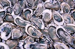 Oysters 1. Oysters on the market Royalty Free Stock Photography