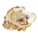 Oysters. Open one oysters studio isolated on white Royalty Free Stock Image
