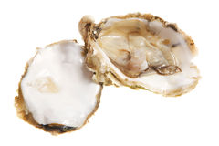 Oysters. Open oysters studio isolated on white Stock Photography