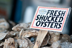 Oysters. Fresh Oysters caught in the Chesapeake Bay Royalty Free Stock Photo