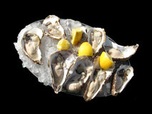 Oysters. Fresh natural oysters on ice with lemon. Isolated on black background Stock Photo