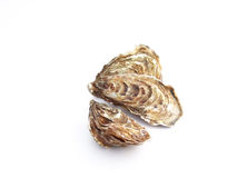 Oysters stock photography
