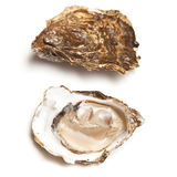 Oysters. Isolated on white background Stock Photos