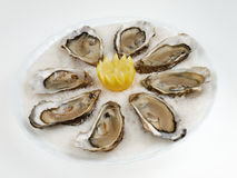 Oysters. Beautiful plate of seafood very appetizing Royalty Free Stock Photos