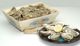 Oysters. Box of whole oysters in shell,  with sharp knife and plate with oysters opened in half shell to be served with lemon Stock Images