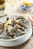 Oysters. A plate of fresh oysters Stock Images