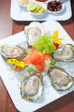 Oysters. Fresh Oysters for dinner tonight Stock Photos