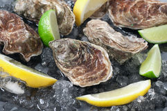 Oysters Stock Image