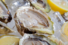 Oysters Royalty Free Stock Image