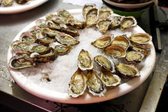 Oysters. Big plate of oysters served on ice Royalty Free Stock Images
