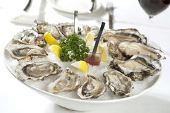 Free Oysters Royalty Free Stock Photo - 25929675