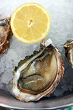 Oysters. On an ice and with a lemon Stock Photo