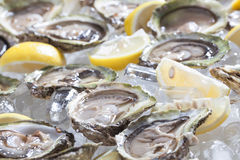 Oysters. Oysters in a bowl with lemons Stock Photo