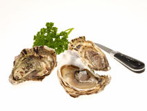 Oysters. Seafood appetizing on white background Royalty Free Stock Image