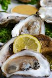 Oysters Royalty Free Stock Photos