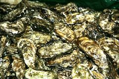 Oysters 36. Osters on the martket Stock Image