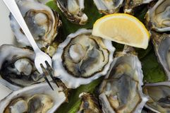 Oysters. Plate of oysters on half shell stock photo