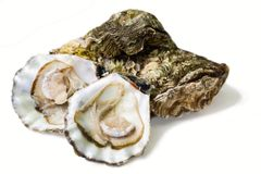 Free Oysters Stock Photography - 4379302