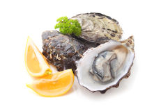 Free Oysters Royalty Free Stock Photography - 43912357