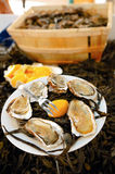 Oysters. On a plate with lemon and water-plants Stock Photo
